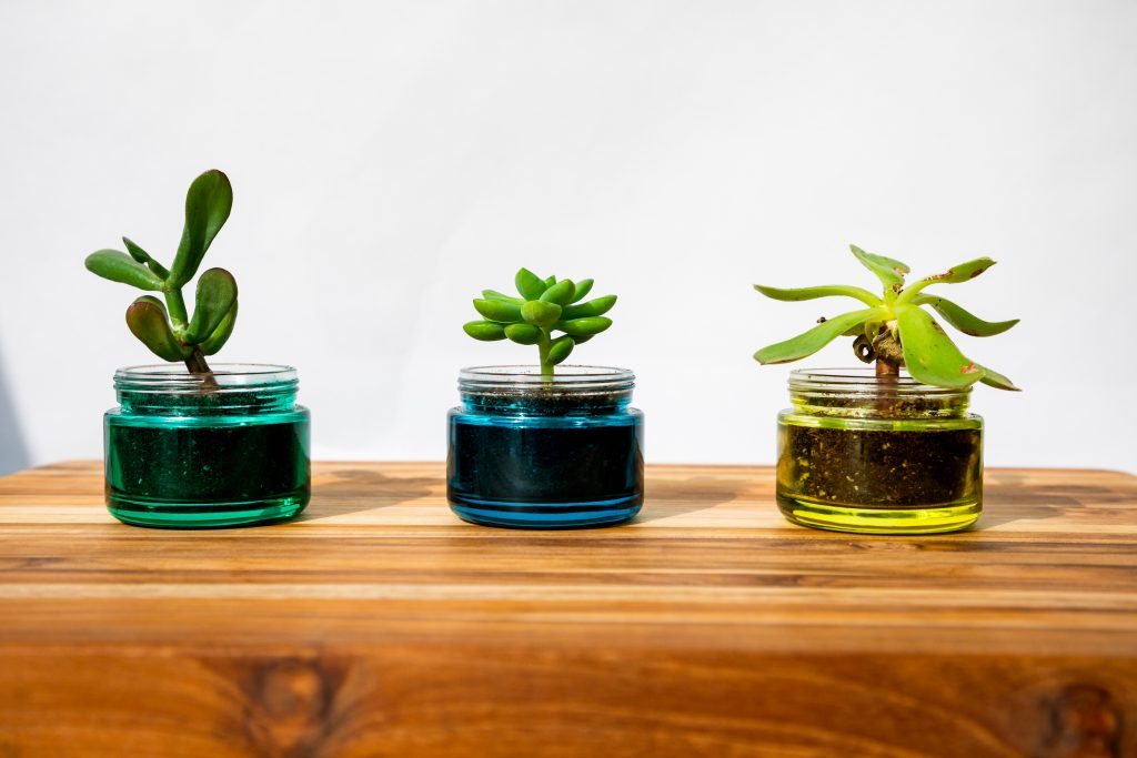 pollen-gear-succulent-reuse-sustainability