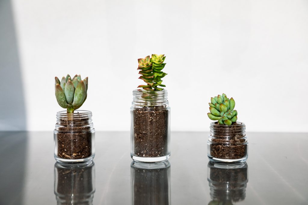 pollen-gear-succulent-hiline-jar-packaging